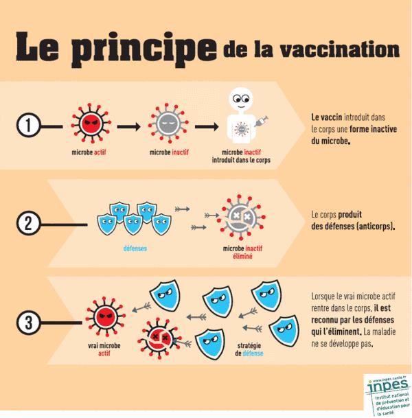Principe de la vaccination